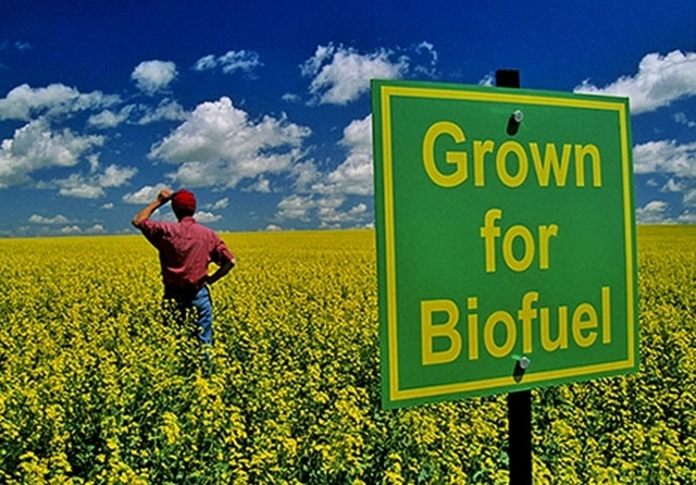 Hemp-Biofuels-to-Save-The-World-The-Leaf-Online